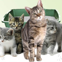 Stikitty Help Us Create The World S Most Innovative Cat