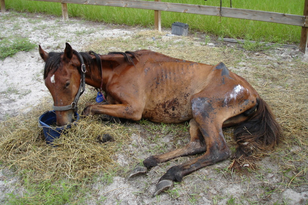 Save A Mustang Horses Urgently Need Hay And Medical Care