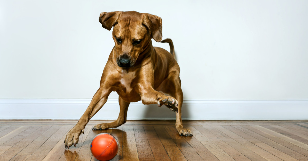 PlayDate: World's First Pet Camera in a Smart Ball