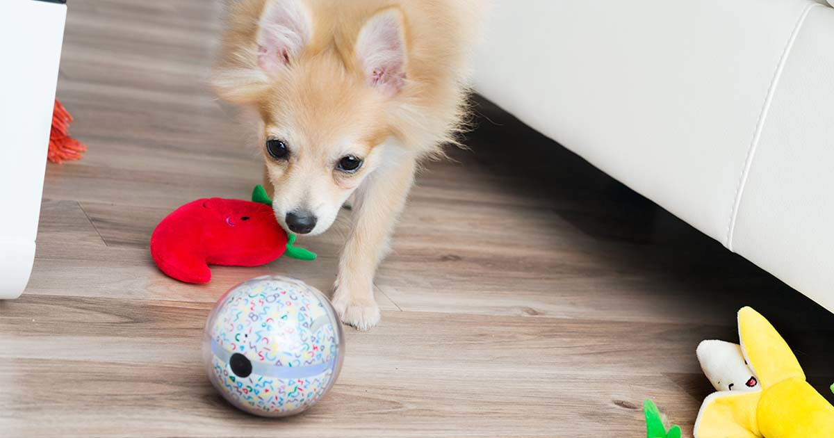 Pebby: World's Most Advanced Smart Ball for Pets!