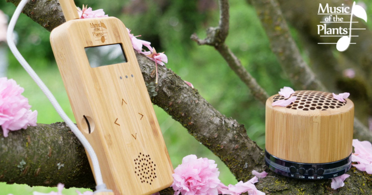 Bamboo - The instrument that gives plants a voice