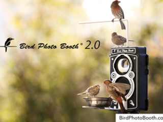 See Life Through A New Lens. Bird Photo Booth 2.0 Is An Interactive Bird  Feeder And Wireless Motion Activated Bird Camera Combination That Lets You  Remotely ...