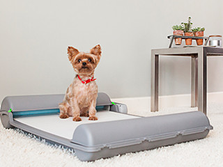 BrilliantPad: Self-Cleaning Indoor Dog Potty | Indiegogo