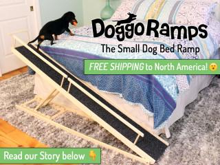 best dog ramp