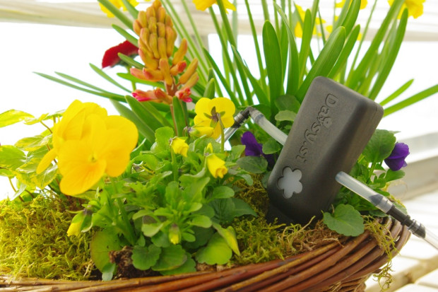 Daisy.si - Smart plant watering | Ingogo on lawn equipment, weighing equipment, gardening equipment, fertilizer equipment, plant equipment, hunting equipment, farming equipment, wedding equipment, washing equipment, mowing equipment, landscaping equipment, pond equipment,