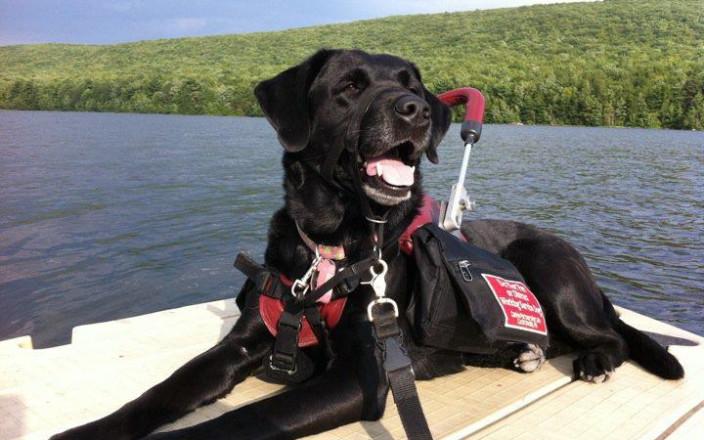 Help World's 1st Cardiac Service Dog Adele Retire