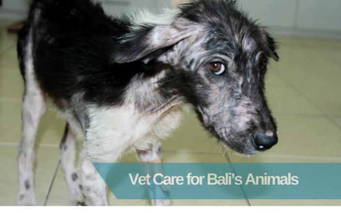 HELP SAVE BALI'S ANIMALS