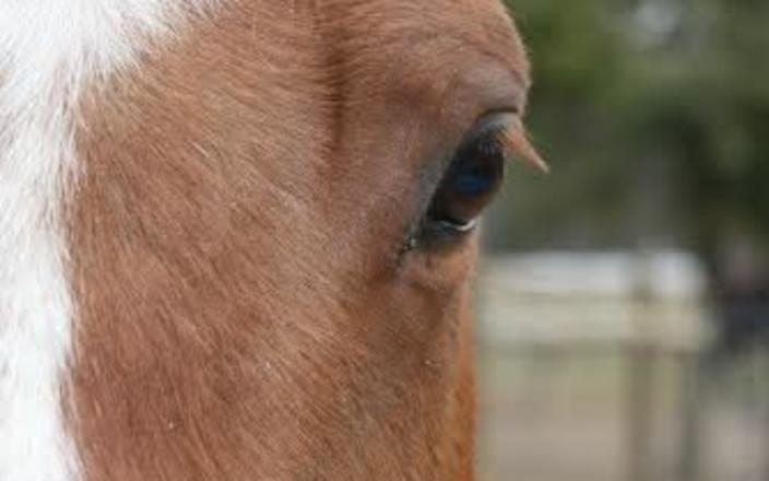 Horseracing Wrongs:  Help us End Horseracing