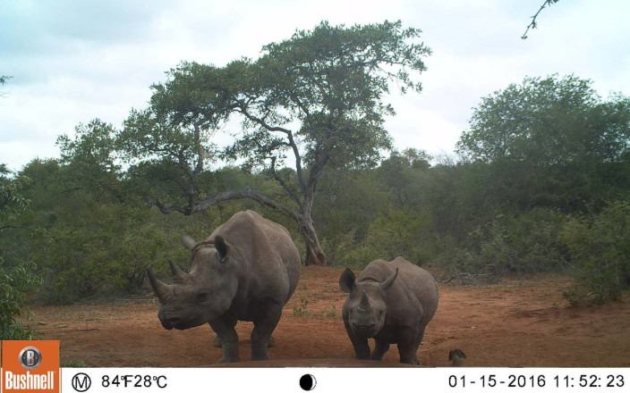 Camera Traps for Balule's Rhinos