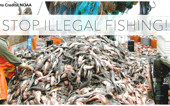 Report illegal fishing with Ocean Patrol!