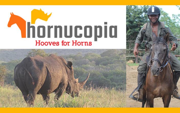 Rhinos & Horses