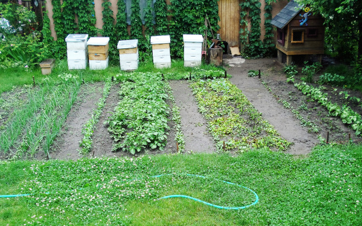 Startup Funding for a Nonprofit to Protect Bees