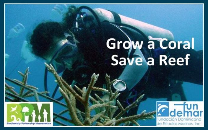 Grow your own coral reef – and protect the ocean