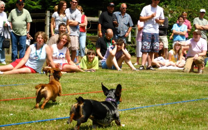 Firecracker Wiener Nationals Wiener Dog Race