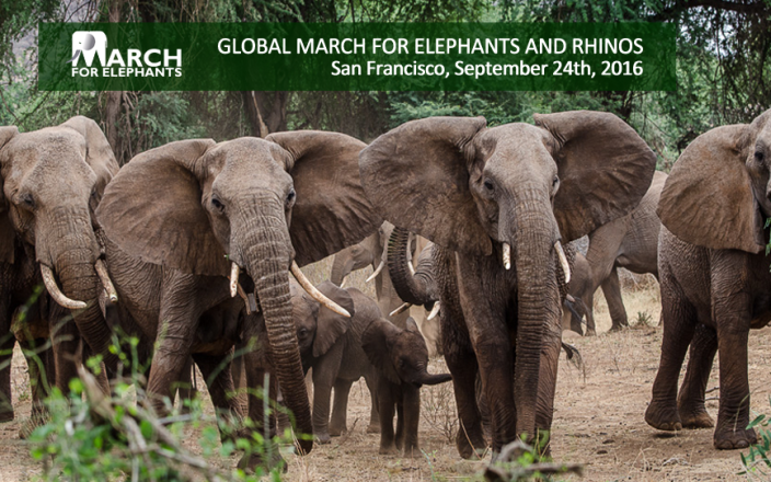Help Us End the Killing of Elephants & Rhinos