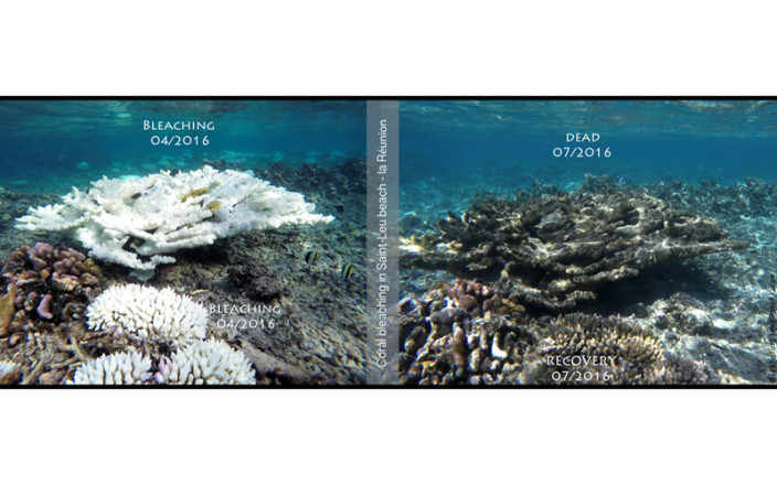 How to stop coral reefs from bleaching and dying?