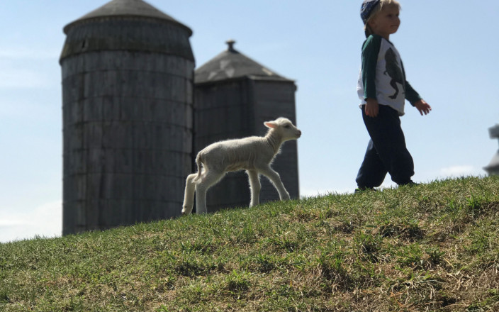 Save our Silos -- Help the Dairy Ell!