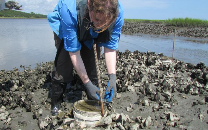 Oystermen & Fishermen Study