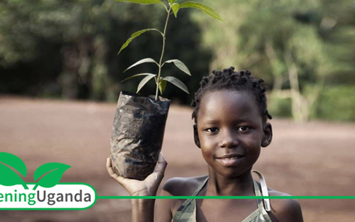 Greening Uganda
