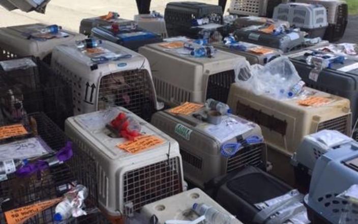 Hurricane Irma Animal Evacuation