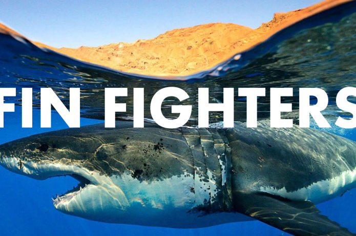 Fin Fighters - Uniting the global shark movement  | Indiegogo