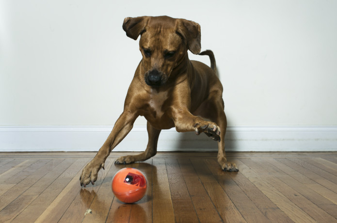 PlayDate: World's First Pet Camera in a Smart Ball   Indiegogo