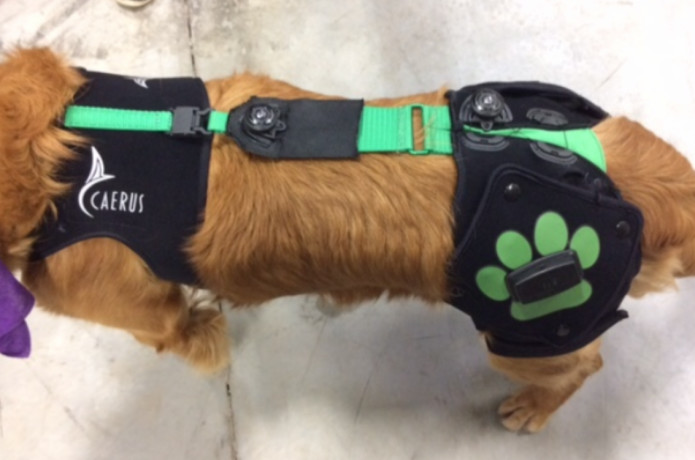 Embrace Relief System -- Dog Pain