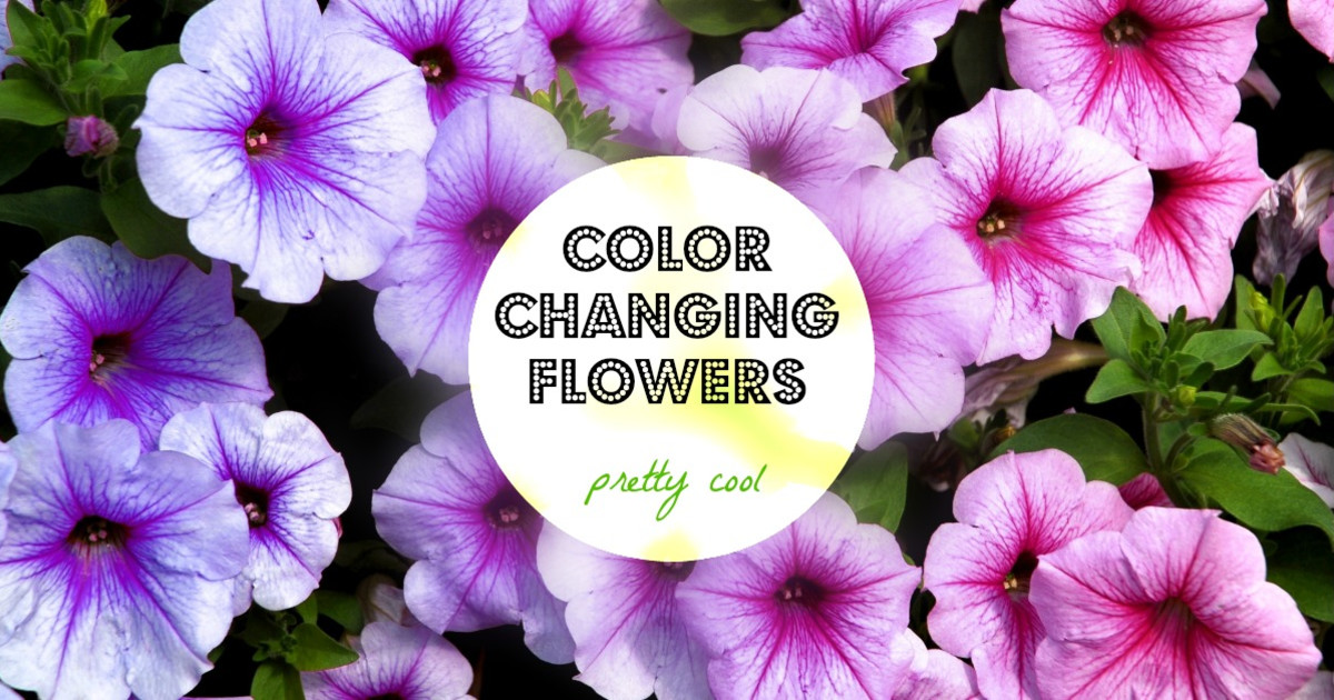 Color changing flowers indiegogo for Color changing roses