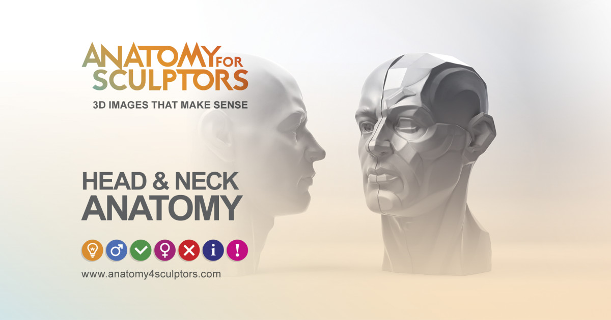 3d head and neck anatomy with special senses and basic.