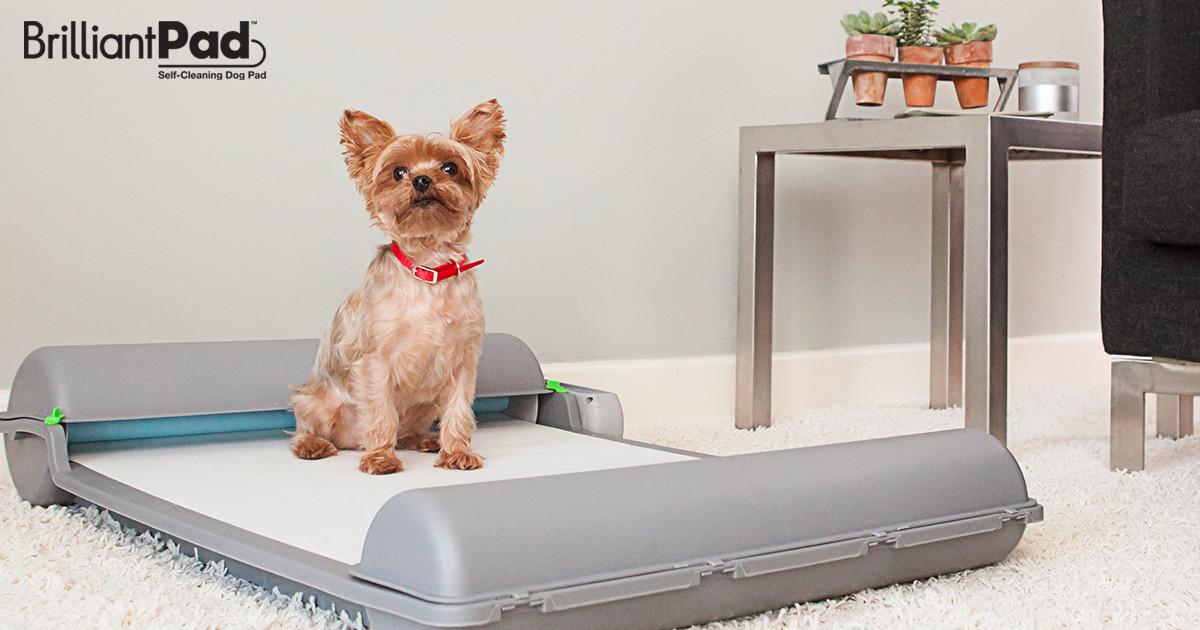 Brilliantpad Self Cleaning Indoor Dog Potty Indiegogo
