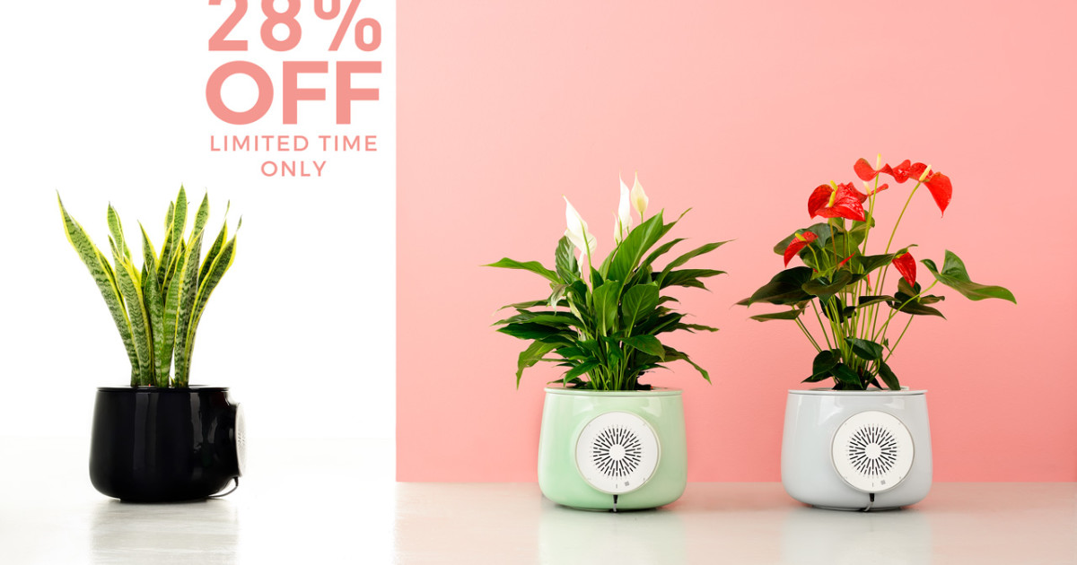 Clairy: The Most Amazing Natural Air Purifier | Indiegogo