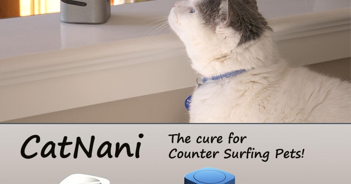 keeping an outdoor cat warm in winter