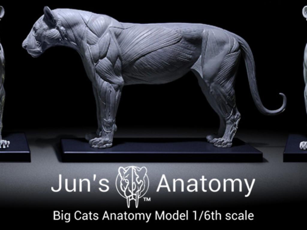 Big Cats Artist Anatomy Models Indiegogo