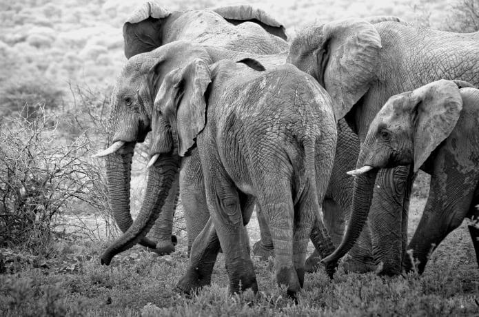 1155014d5 CONSERVATION THROUGH ART- A Kenya Wildlife Project