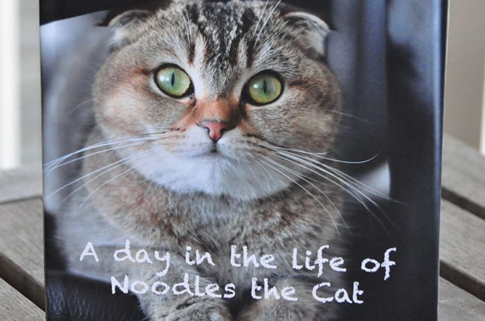 A day in the life of Noodles the Cat - Children's book