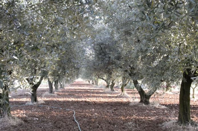 Project Alpha: Making olive harvesting easier  | Indiegogo