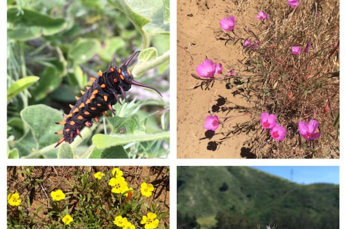Butterflies & Wildflowers on San Bruno Mt Dunes! | Indiegogo