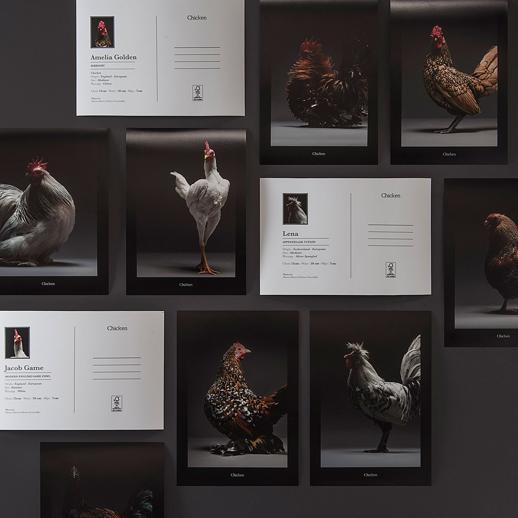 The Most Stunning Chicken Book Photos Ever Made   Indiegogo