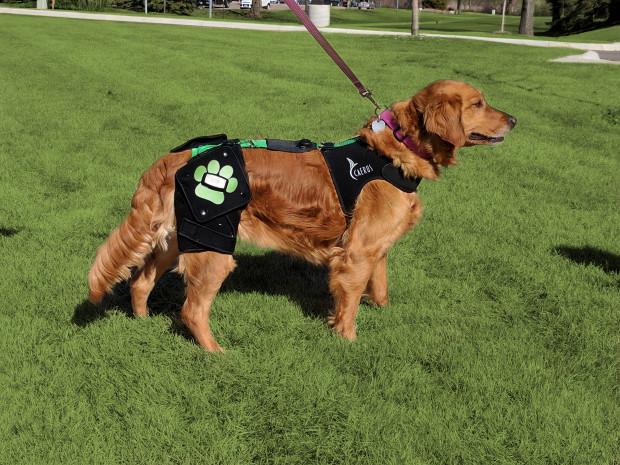 Ortho Dog Hip Hound Brace Review