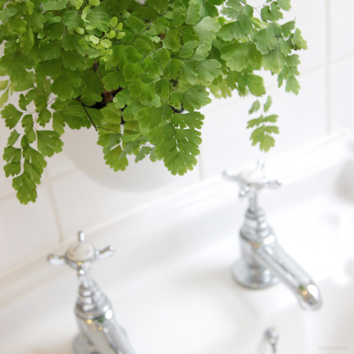 Awesome With The Eden Suction Planter You Can Quickly And Easily Grow Plants In  Your Home. Grow A Herb Garden In Your Kitchen, Flowers In Your Living Room  Or Ferns ...