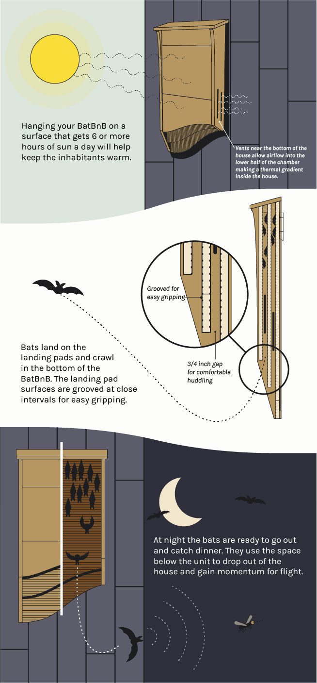 All Our Product Specifications Are Based On Decades Of Scientific Research Into The Most Successful Bat Houses As Well Cutting Edge Input From