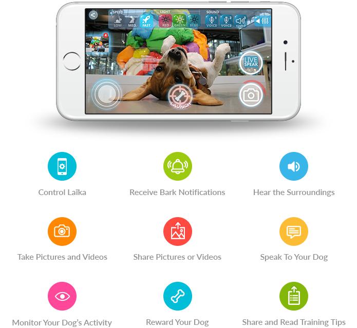 Laïka: An Interactive Companion for You & Your Dog | Indiegogo