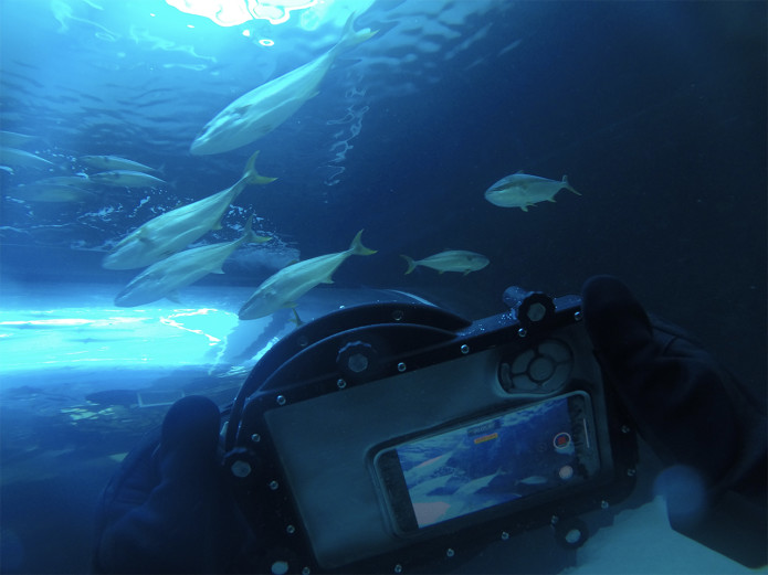 """GDOME Mobile Universal Underwater Housing For Smartphones"""""""