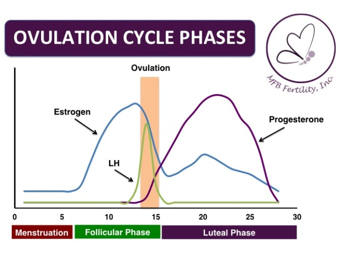 At Home Ovulation Double Check Test  Indiegogo-8649