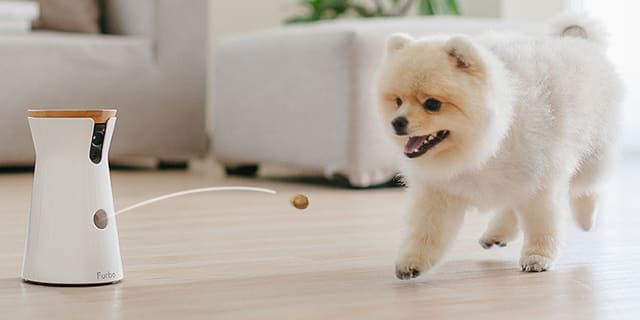 Furbo World S Best Treat Tossing Dog Camera Indiegogo